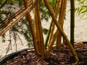 bamboo_bamboo sticks